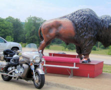 Bill The Buffalo @ Loretta Lynn's